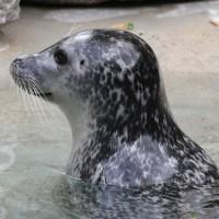 17-06-2015_Tierbilder_Augsburger-Zoo_Poeppel_new-facts-eu0153