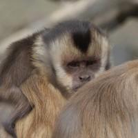 17-06-2015_Tierbilder_Augsburger-Zoo_Poeppel_new-facts-eu0154