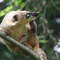 17-06-2015_Tierbilder_Augsburger-Zoo_Poeppel_new-facts-eu0156