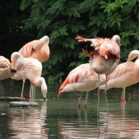 17-06-2015_Tierbilder_Augsburger-Zoo_Poeppel_new-facts-eu0159