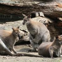 17-06-2015_Tierbilder_Augsburger-Zoo_Poeppel_new-facts-eu0168