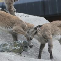 17-06-2015_Tierbilder_Augsburger-Zoo_Poeppel_new-facts-eu0170