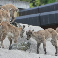 17-06-2015_Tierbilder_Augsburger-Zoo_Poeppel_new-facts-eu0171