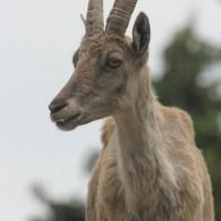 17-06-2015_Tierbilder_Augsburger-Zoo_Poeppel_new-facts-eu0173