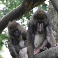 17-06-2015_Tierbilder_Augsburger-Zoo_Poeppel_new-facts-eu0175