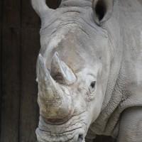 17-06-2015_Tierbilder_Augsburger-Zoo_Poeppel_new-facts-eu0181