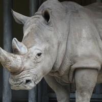 17-06-2015_Tierbilder_Augsburger-Zoo_Poeppel_new-facts-eu0182