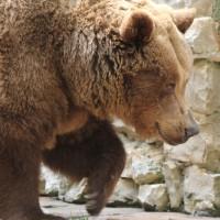 17-06-2015_Tierbilder_Augsburger-Zoo_Poeppel_new-facts-eu0185