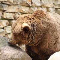 17-06-2015_Tierbilder_Augsburger-Zoo_Poeppel_new-facts-eu0186