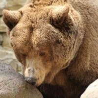 17-06-2015_Tierbilder_Augsburger-Zoo_Poeppel_new-facts-eu0187