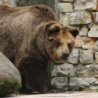 17-06-2015_Tierbilder_Augsburger-Zoo_Poeppel_new-facts-eu0188