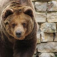 17-06-2015_Tierbilder_Augsburger-Zoo_Poeppel_new-facts-eu0189