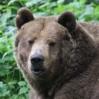 17-06-2015_Tierbilder_Augsburger-Zoo_Poeppel_new-facts-eu0191