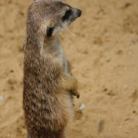 17-06-2015_Tierbilder_Augsburger-Zoo_Poeppel_new-facts-eu0192