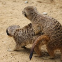 17-06-2015_Tierbilder_Augsburger-Zoo_Poeppel_new-facts-eu0195