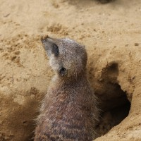 17-06-2015_Tierbilder_Augsburger-Zoo_Poeppel_new-facts-eu0196
