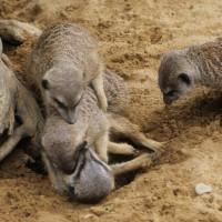 17-06-2015_Tierbilder_Augsburger-Zoo_Poeppel_new-facts-eu0200