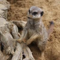 17-06-2015_Tierbilder_Augsburger-Zoo_Poeppel_new-facts-eu0201