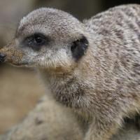 17-06-2015_Tierbilder_Augsburger-Zoo_Poeppel_new-facts-eu0202