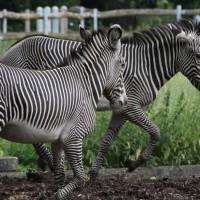 17-06-2015_Tierbilder_Augsburger-Zoo_Poeppel_new-facts-eu0204