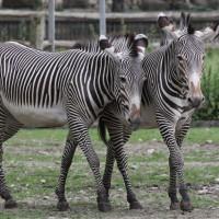 17-06-2015_Tierbilder_Augsburger-Zoo_Poeppel_new-facts-eu0205