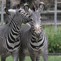 17-06-2015_Tierbilder_Augsburger-Zoo_Poeppel_new-facts-eu0206