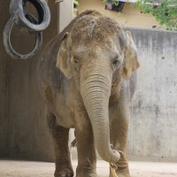 17-06-2015_Tierbilder_Augsburger-Zoo_Poeppel_new-facts-eu0207
