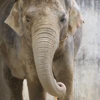 17-06-2015_Tierbilder_Augsburger-Zoo_Poeppel_new-facts-eu0208
