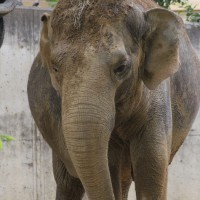 17-06-2015_Tierbilder_Augsburger-Zoo_Poeppel_new-facts-eu0209
