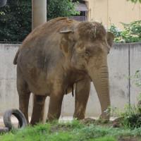 17-06-2015_Tierbilder_Augsburger-Zoo_Poeppel_new-facts-eu0210