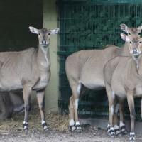17-06-2015_Tierbilder_Augsburger-Zoo_Poeppel_new-facts-eu0211