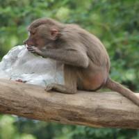 17-06-2015_Tierbilder_Augsburger-Zoo_Poeppel_new-facts-eu0212