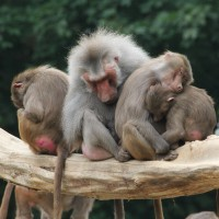17-06-2015_Tierbilder_Augsburger-Zoo_Poeppel_new-facts-eu0213