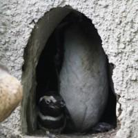 17-06-2015_Tierbilder_Augsburger-Zoo_Poeppel_new-facts-eu0217