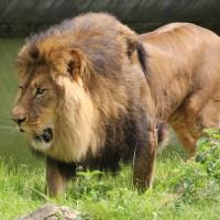 17-06-2015_Tierbilder_Augsburger-Zoo_Poeppel_new-facts-eu0219