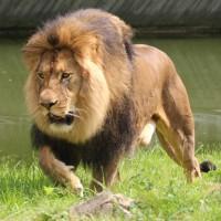 17-06-2015_Tierbilder_Augsburger-Zoo_Poeppel_new-facts-eu0220