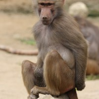 17-06-2015_Tierbilder_Augsburger-Zoo_Poeppel_new-facts-eu0221