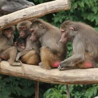 17-06-2015_Tierbilder_Augsburger-Zoo_Poeppel_new-facts-eu0222