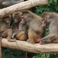 17-06-2015_Tierbilder_Augsburger-Zoo_Poeppel_new-facts-eu0223