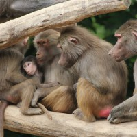 17-06-2015_Tierbilder_Augsburger-Zoo_Poeppel_new-facts-eu0225