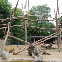 17-06-2015_Tierbilder_Augsburger-Zoo_Poeppel_new-facts-eu0226