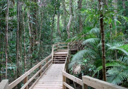 Dschungel in Australien, über dts Nachrichtenagentur