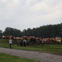 22-07-15_BW_Kisslegg-Kebach_Brand_Bauernhof_Poeppel_new-facts-eu0059