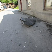 Silo-Explosion 25.08.15 Gr++nkraut 012