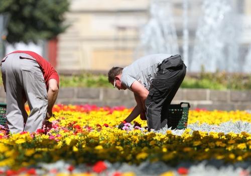 Gartenarbeiter auf einem Blumenbeet, über dts Nachrichtenagentur