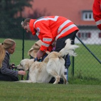 31-10-2015_Bayern_Oberallgaeu_BRK_Rettungshundestaffel_Eignungstest_Kuehnl_new-facts-eu008