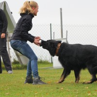 31-10-2015_Bayern_Oberallgaeu_BRK_Rettungshundestaffel_Eignungstest_Kuehnl_new-facts-eu027