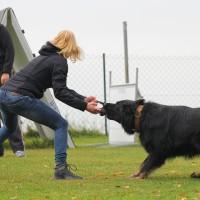 31-10-2015_Bayern_Oberallgaeu_BRK_Rettungshundestaffel_Eignungstest_Kuehnl_new-facts-eu028