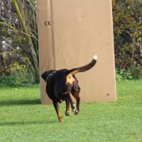 31-10-2015_Bayern_Oberallgaeu_BRK_Rettungshundestaffel_Eignungstest_Kuehnl_new-facts-eu068