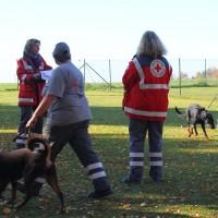 31-10-2015_Bayern_Oberallgaeu_BRK_Rettungshundestaffel_Eignungstest_Kuehnl_new-facts-eu082